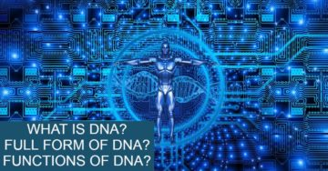 what-is-dna-full-form-of-dna-ka-functions